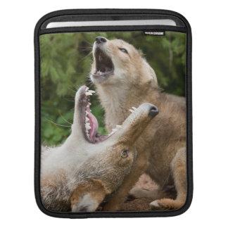 USA, Minnesota, Sandstone, Minnesota Wildlife 6 iPad Sleeve