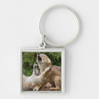 USA, Minnesota, Sandstone, Minnesota Wildlife 6 Keychain