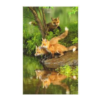 USA, Minnesota, Sandstone, Minnesota Wildlife 7 Canvas Print