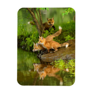 USA, Minnesota, Sandstone, Minnesota Wildlife 7 Magnet