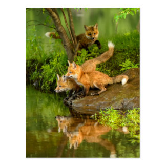 USA, Minnesota, Sandstone, Minnesota Wildlife 7 Postcard