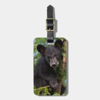 USA, Minnesota, Sandstone, Minnesota Wildlife 8 Luggage Tag