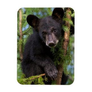 USA, Minnesota, Sandstone, Minnesota Wildlife 8 Magnet