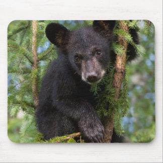 USA, Minnesota, Sandstone, Minnesota Wildlife 8 Mouse Pad
