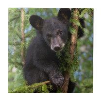 USA, Minnesota, Sandstone, Minnesota Wildlife 8 Tile