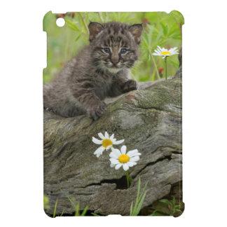 USA, Minnesota, Sandstone, Minnesota Wildlife 9 iPad Mini Covers
