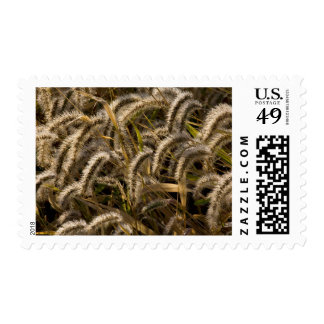USA, Missouri, Foxtail (Diaspore) Postage