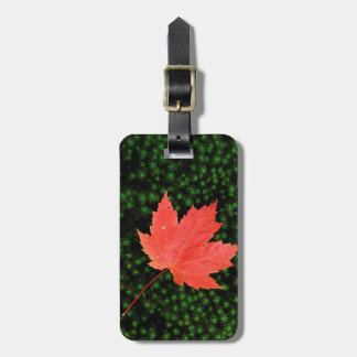 USA, Missouri, Mark Twain National Forest Tag For Bags