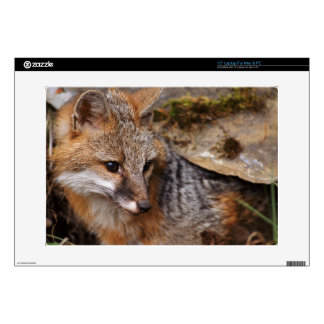 USA, Montana, Kalispell. Gray fox at Triple D Decal For Laptop