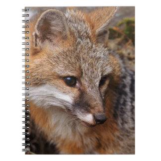 USA, Montana, Kalispell. Gray fox at Triple D Notebook