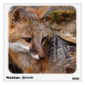 USA, Montana, Kalispell. Gray fox at Triple D Wall Sticker