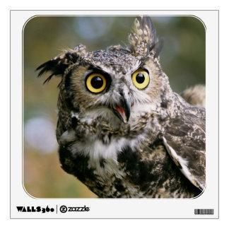 USA, Montana, Kalispell. Great horned owl Wall Sticker
