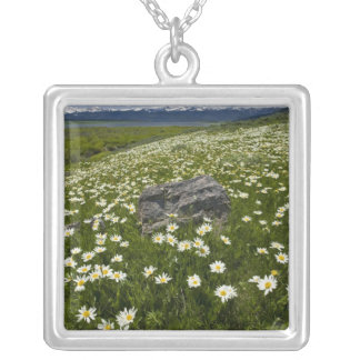 USA, Montana, Wild Daisy blooming in meadow by Square Pendant Necklace