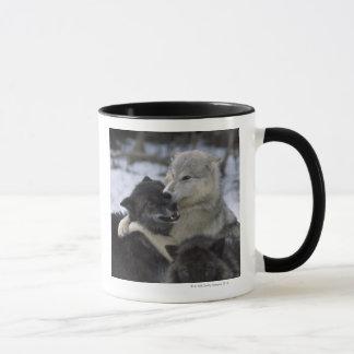 USA, Montana, Wolves playing in snow Mug