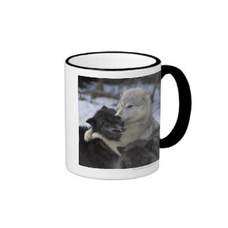 USA, Montana, Wolves playing in snow Coffee Mug