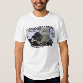 USA, Montana, Wolves playing in snow T-shirts