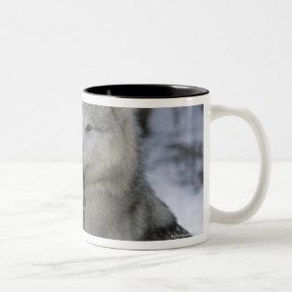 USA, Montana, Wolves playing in snow Two-Tone Coffee Mug