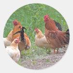 USA, Nebraska. Chickens Classic Round Sticker