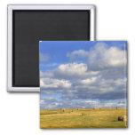 USA, Nebraska, Morrill County. Golden hay 2 Inch Square Magnet