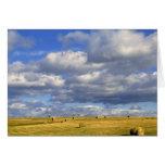 USA, Nebraska, Morrill County. Golden hay Card