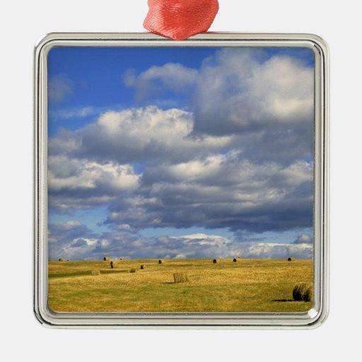 USA, Nebraska, Morrill County. Golden hay Metal Ornament