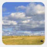 USA, Nebraska, Morrill County. Golden hay Square Sticker