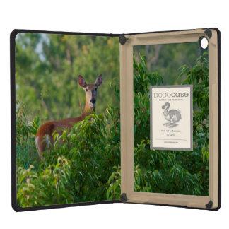 USA, Nebraska, White Tail Doe On Hill iPad Mini Case