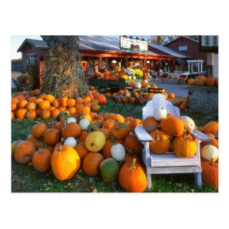 USA, New England, Maine, Wells. Autumn Display Postcard