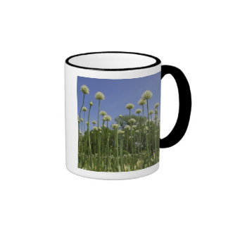 USA, New England, Massachusetts, Boston, 3 Mug