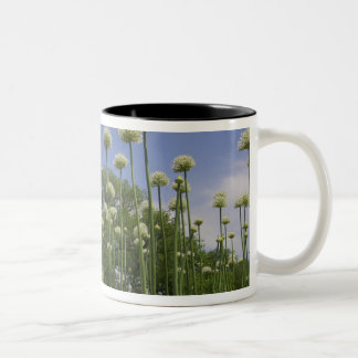 USA, New England, Massachusetts, Boston, 3 Two-Tone Coffee Mug