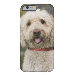 Case-Mate Barely There iPhone 6 Case with Labradoodle Phone Cases design