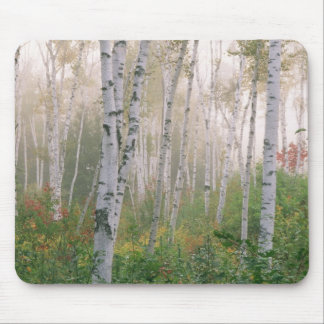 USA, New Hampshire. Birch trees in clearing fog Mouse Pad