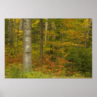 USA, New Hampshire, Livermore, White Mountain Poster