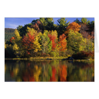 USA, New Hampshire, Moultonborough. Trees in Card