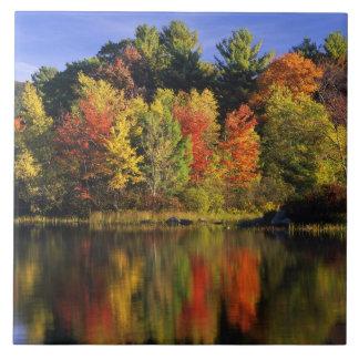 USA, New Hampshire, Moultonborough. Trees in Ceramic Tile