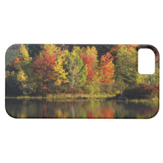 USA, New Hampshire, Moultonborough. Trees in iPhone SE/5/5s Case