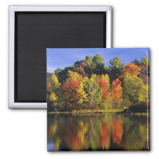 USA, New Hampshire, Moultonborough. Trees in 2 Inch Square Magnet