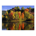 USA, New Hampshire, Moultonborough. Trees in Postcard