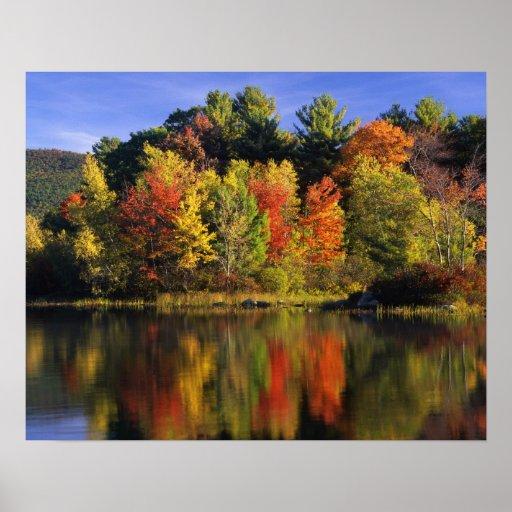 USA, New Hampshire, Moultonborough. Trees in Print