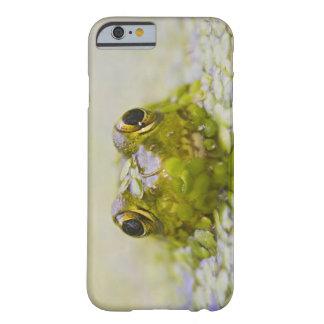 USA, New Jersey, Bernardsville, Sherman Hoffman Barely There iPhone 6 Case