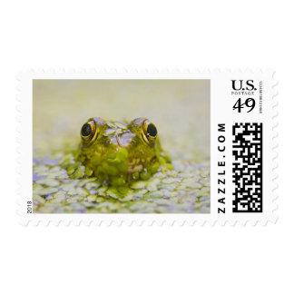 USA, New Jersey, Bernardsville, Sherman Hoffman Stamp