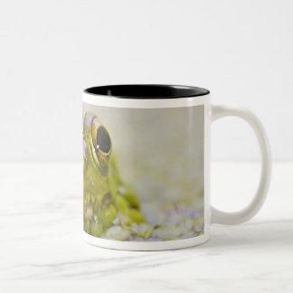 USA, New Jersey, Bernardsville, Sherman Hoffman Two-Tone Coffee Mug