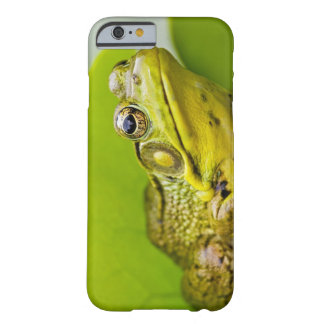 USA, New Jersey, Far Hills, Leonard J. Buck 2 Barely There iPhone 6 Case