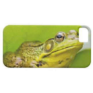 USA, New Jersey, Far Hills, Leonard J. Buck 2 iPhone SE/5/5s Case