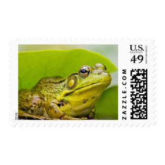USA, New Jersey, Far Hills, Leonard J. Buck 2 Postage Stamps