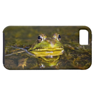 USA, New-Jersey, Far Hills, Leonard J. Buck 3 iPhone SE/5/5s Case