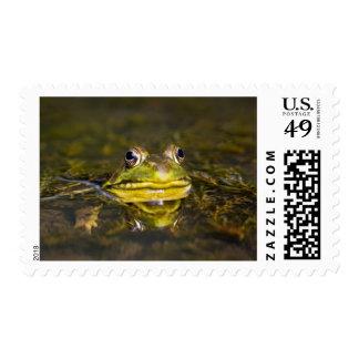 USA, New Jersey, Far Hills, Leonard J. Buck 3 Postage Stamps