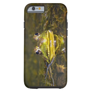 USA, New-Jersey, Far Hills, Leonard J. Buck 3 Tough iPhone 6 Case