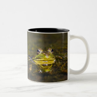 USA, New Jersey, Far Hills, Leonard J. Buck 3 Two-Tone Coffee Mug