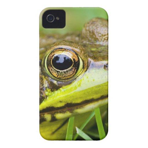 USA, New Jersey, Far Hills, Leonard J. Buck 4 iPhone 4 Case